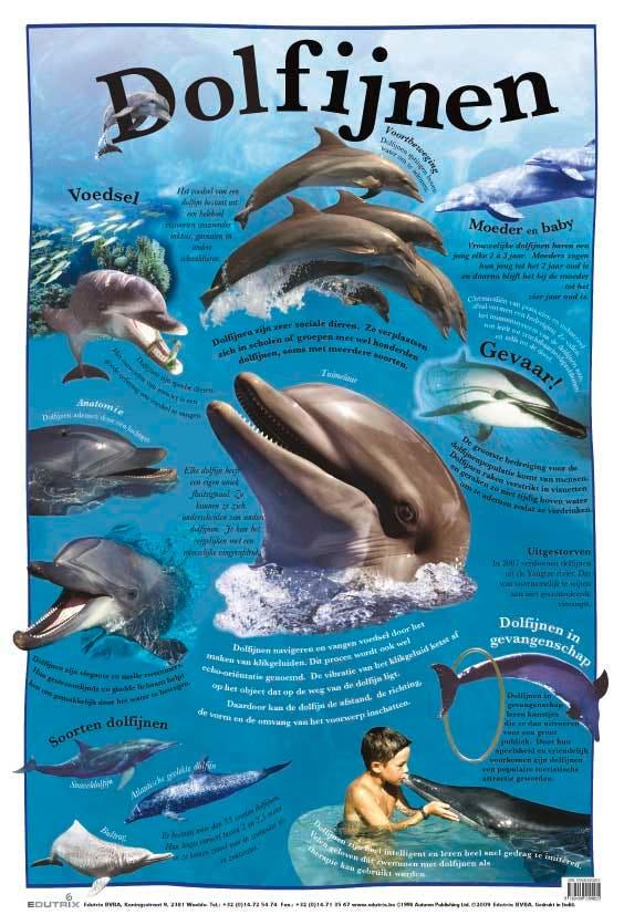Poster Dolfijnen - Edutrix