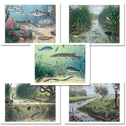 Schoolplaat - Posters natuur